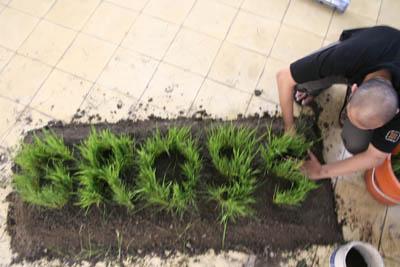 gross national happiness, bocor #1 cemeti art house yogyakarta, padi installation, part